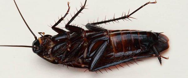 manchester pest control service
