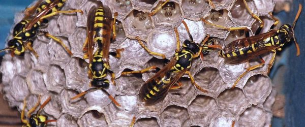 pest control service in greater manchester